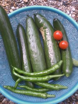 6-23収穫