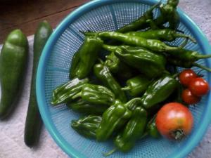 7-7収穫
