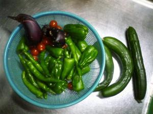 7-24収穫