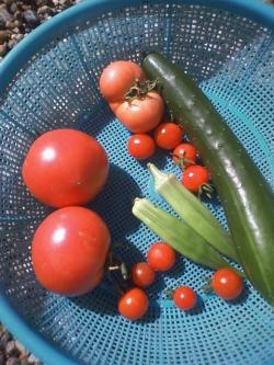 8-1収穫