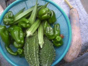 8-15収穫