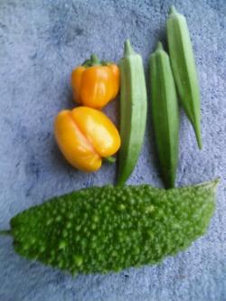 8-27収穫