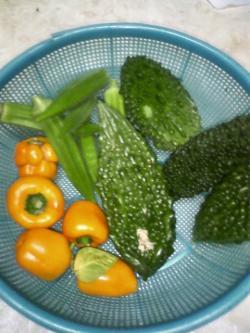 10-4収穫