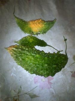 10-15収穫