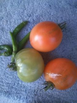 12-20収穫