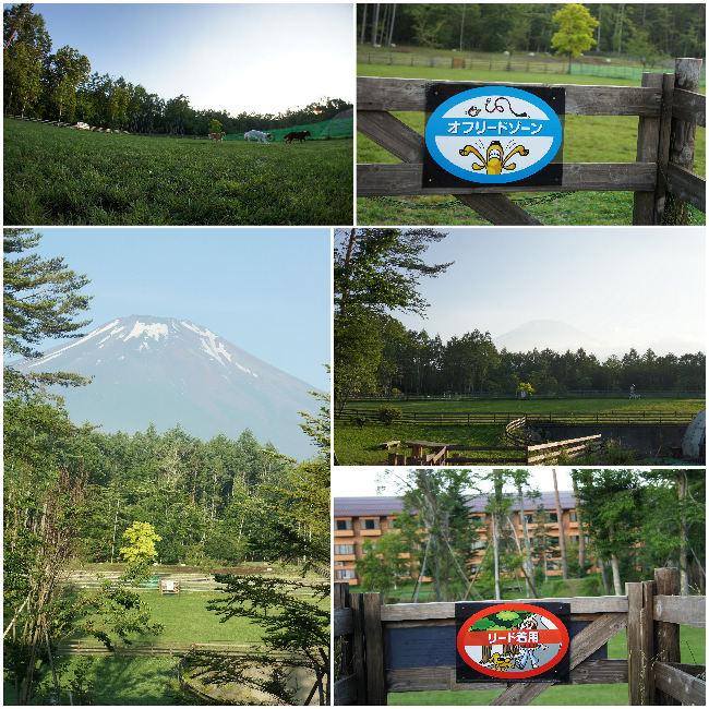 コピー ~ 2012-07-10 山中湖ワフ1
