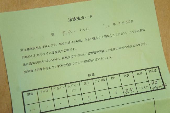 コピー ~ DSC07106