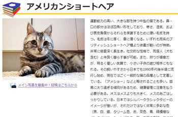 blog_import_5030c61d4504d.jpg