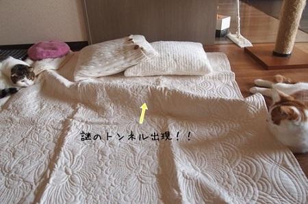 blog_import_5030cad97a321.jpg