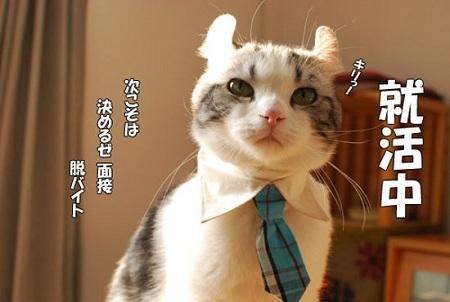 blog_import_5030cb1d7fa3a.jpg