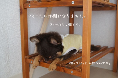 blog_import_5030ccf462d45.jpg