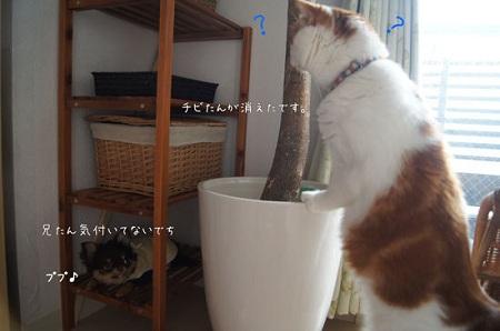 blog_import_5030ccf4e66d2.jpg