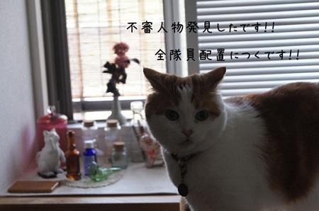 blog_import_5030cd2e877cd.jpg