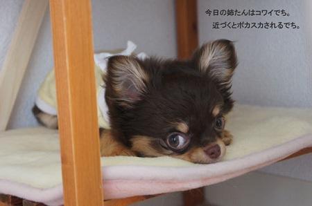 blog_import_5030cd3c12a85.jpg