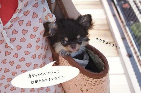 blog_import_5030cd5082a39.jpg