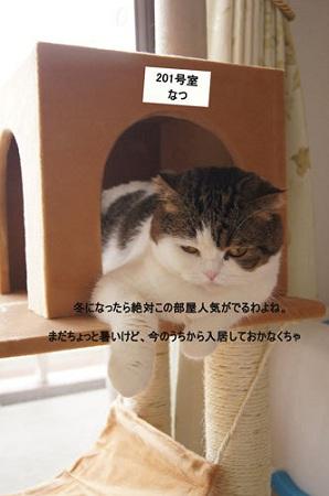 blog_import_5030cda07fa76.jpg