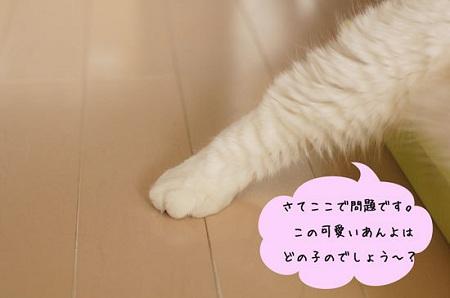 blog_import_5030cdaf6a3c4.jpg