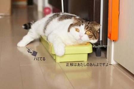 blog_import_5030cdb596785.jpg