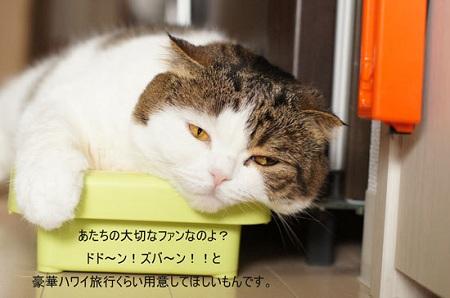 blog_import_5030cdb9e4a99.jpg