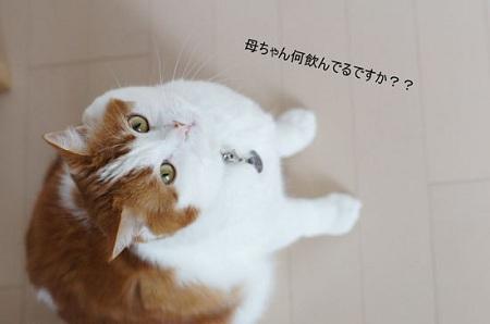 blog_import_5030cdcaf2eed.jpg