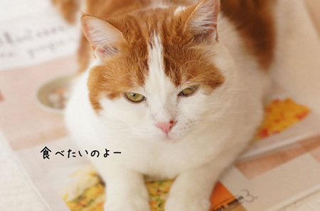 blog_import_5030ce234ca88.jpg