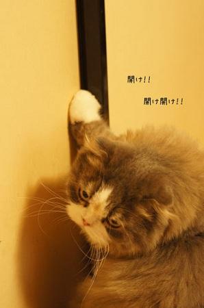 blog_import_5030ce354296a.jpg