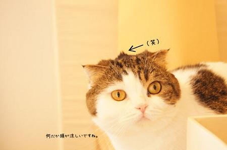 blog_import_5030ce49a16e5.jpg