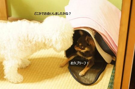 blog_import_5030ce5d78158.jpg
