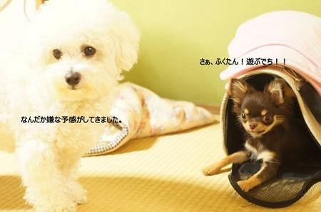 blog_import_5030ce5e373ad.jpg