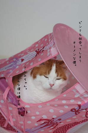 blog_import_5030ce608a9f8.jpg