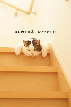 blog_import_5030cf09809a8.jpg