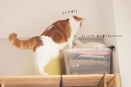 blog_import_5030cf423af46.jpg