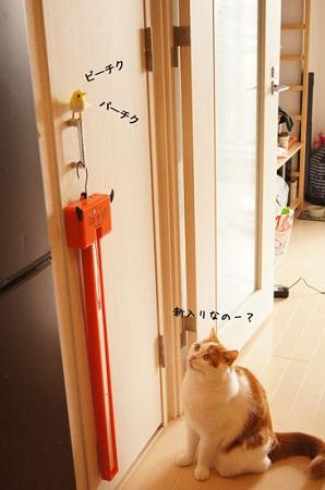 blog_import_5030cf6207294.jpg