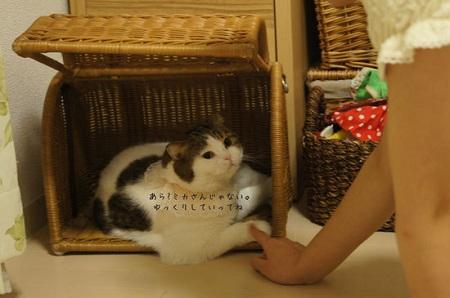 blog_import_5030cf7951e89.jpg