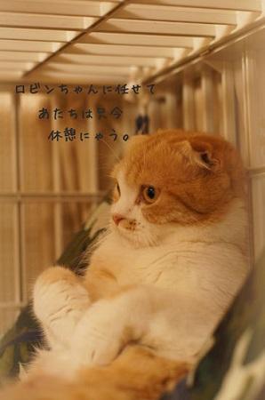 blog_import_5030cf8e39125.jpg