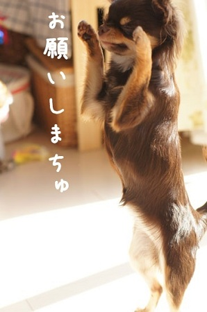 blog_import_5030cf9f65838.jpg