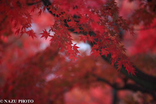 koyou-1000-5.jpg