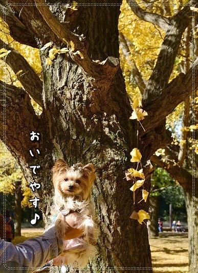 DSC_0229_201411161938086ef.jpg