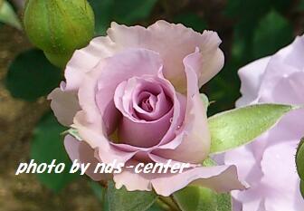 img_2013122701.jpg