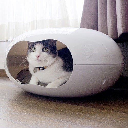 catindoughnut01