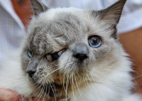 janus-cat-two-faces-01_86636