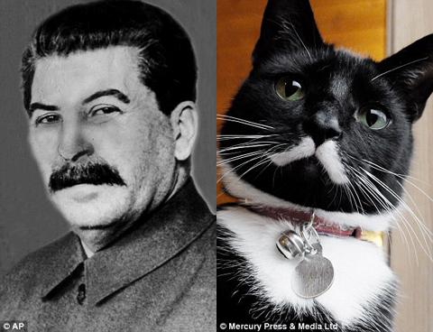 staline_cat
