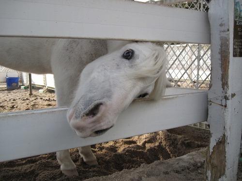 蒜山ホースパーク20121015