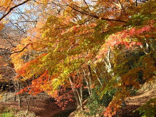 播州龍野・龍野公園 20121203