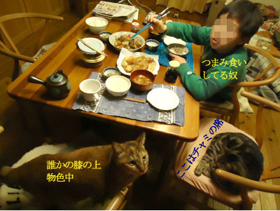 chami_koma31.jpg