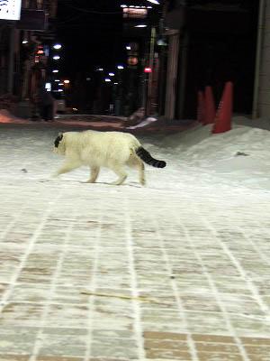 電気感通りの猫DSCN4390