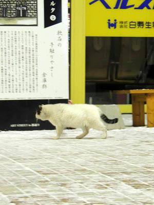 電気館通りの猫DSCN4389