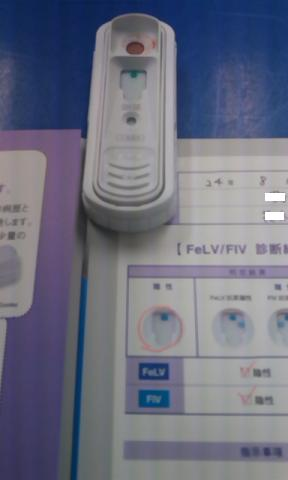 CACRV423.jpg
