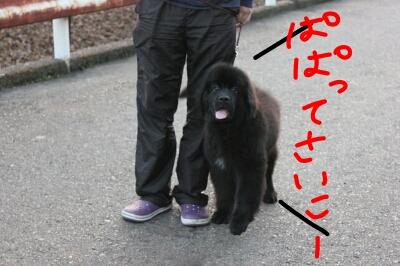 fc2blog_201211040806563c7.jpeg