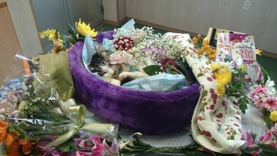ちーのお葬式